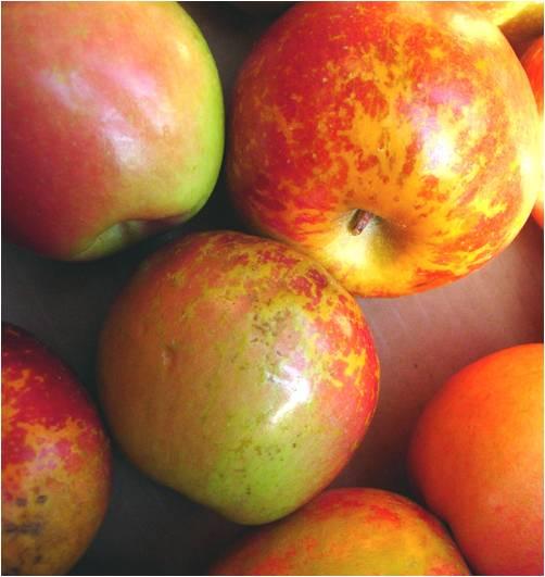 13-apples